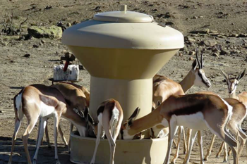 Feeders for Sheep and Wildlife – Please have a look at these Great Products !